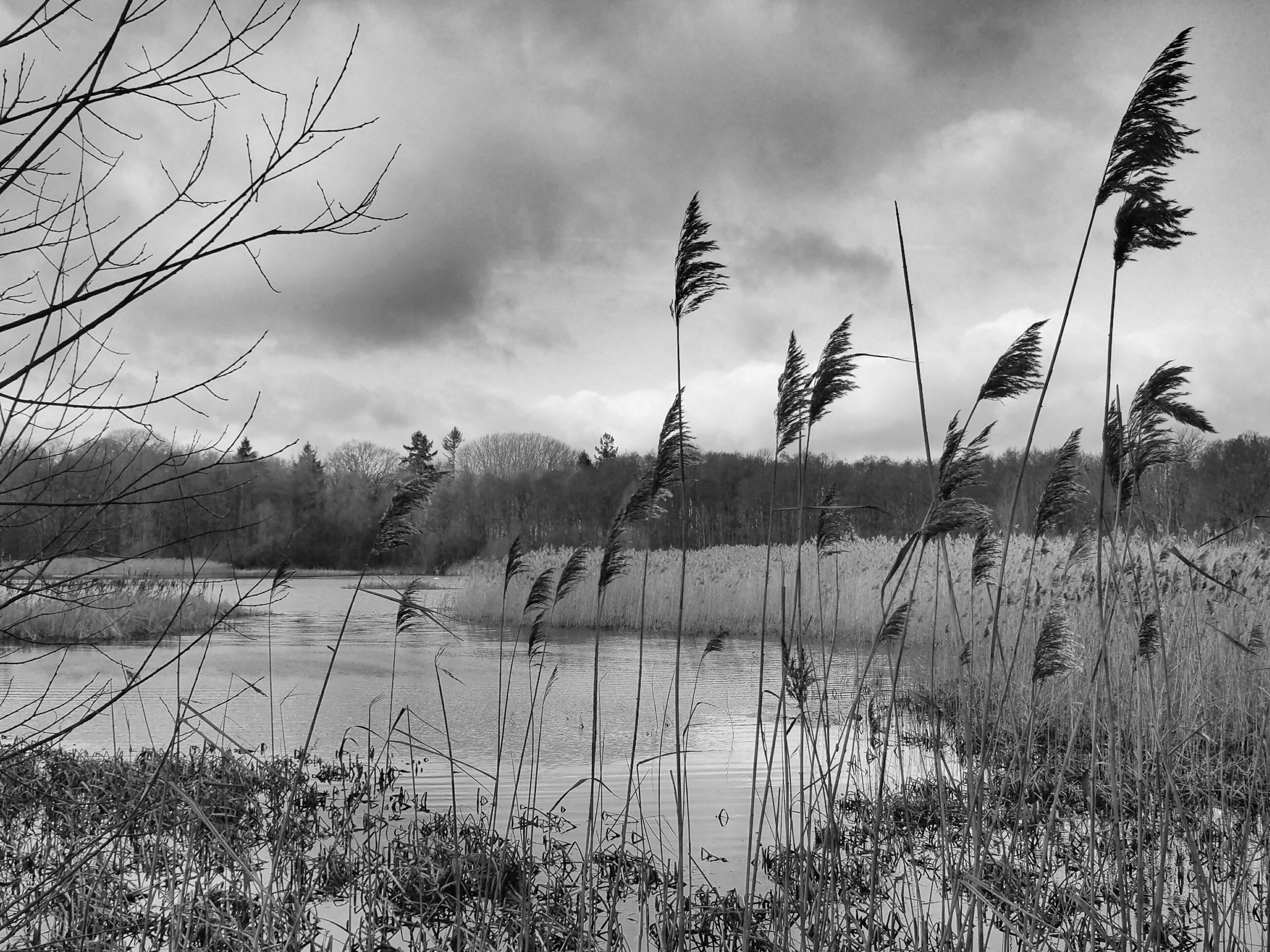Schilf am See |©Anne Seubert