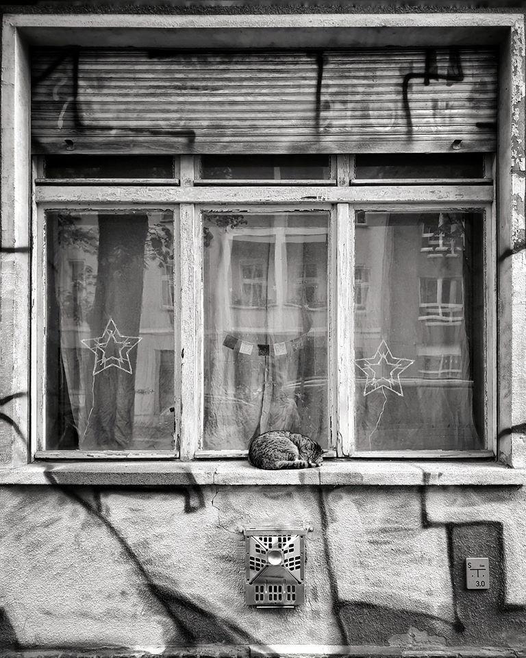 Katzenfenster |©Anne Seubert