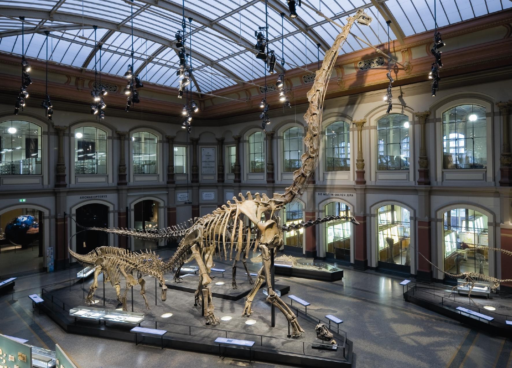 Brachiosaurus_CMYK[1] © Museum für Naturkunde