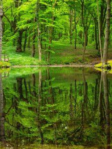Semper Wald, Rügen 2021 | ©Anne Seubert