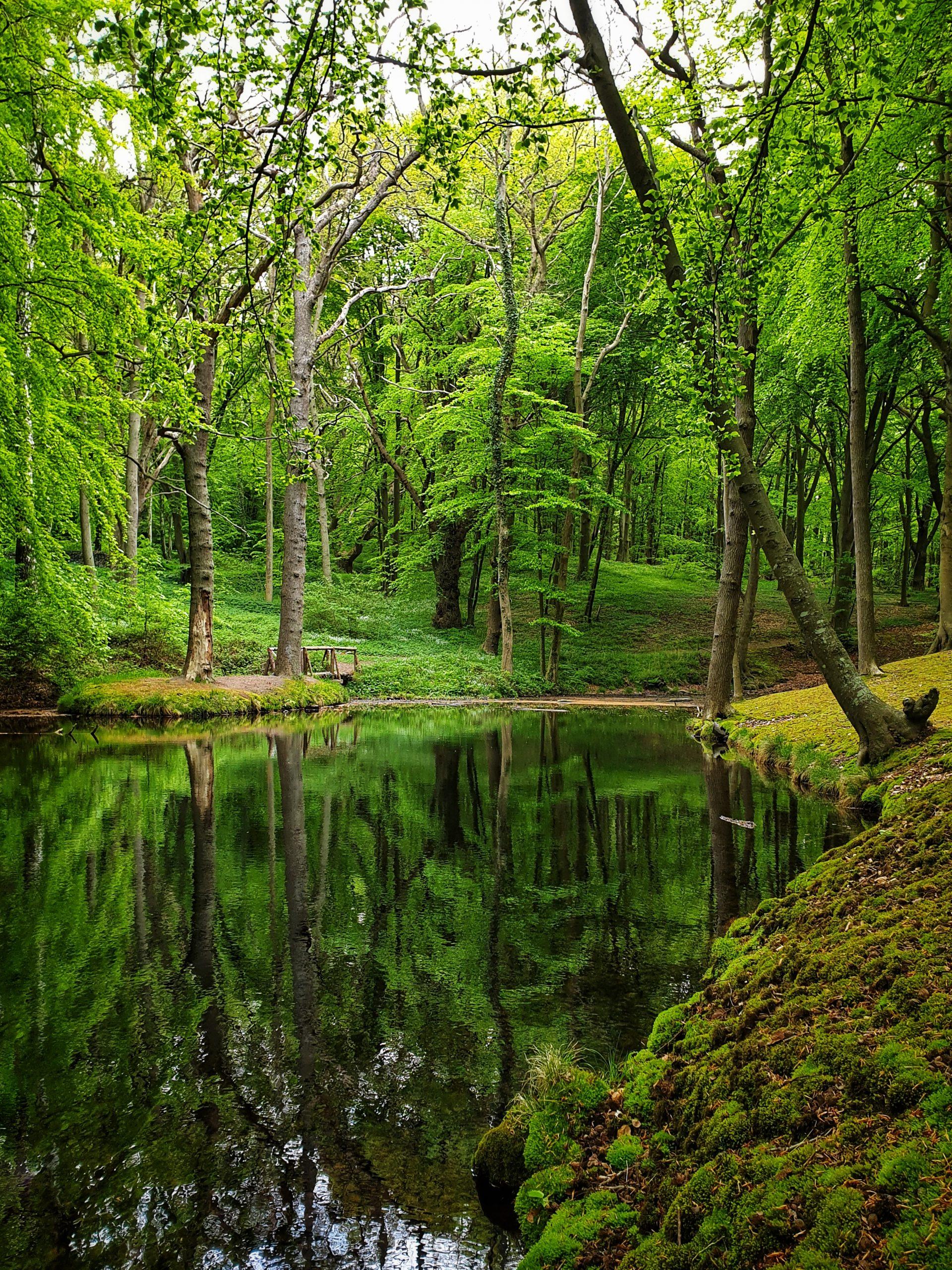 Waldschönheiten | ©Anne Seubert